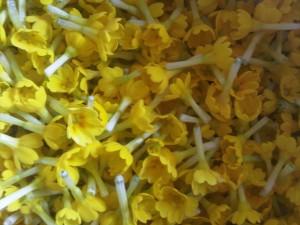 Cowslip flowers